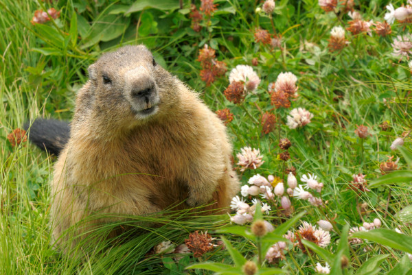 /how-to-build-awesome-integration-tests-with-capybara-j9333y68 feature image