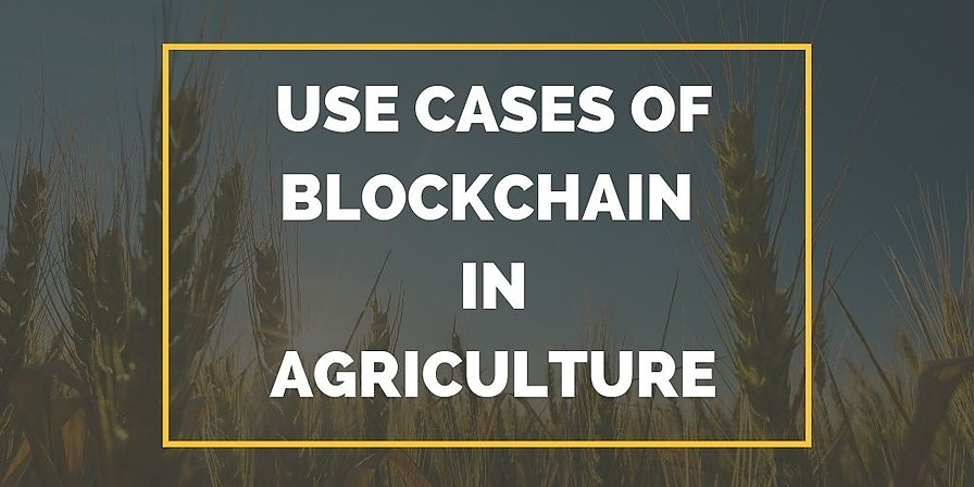 /why-agriculture-industry-needs-to-join-the-blockchain-club-xn28d31zi feature image
