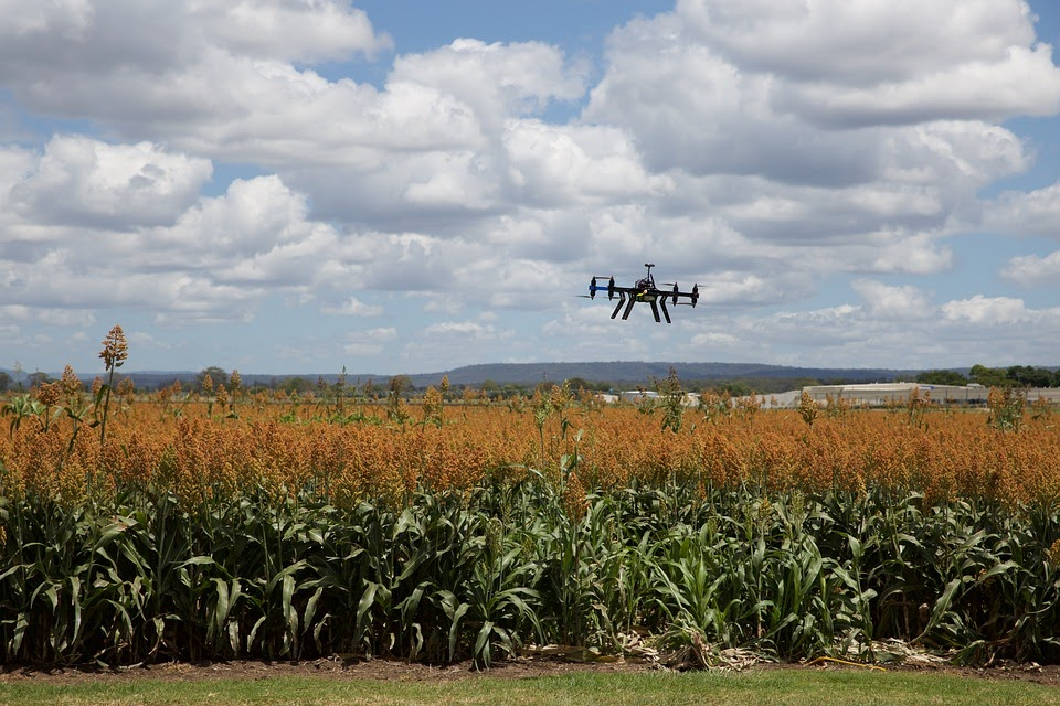 /understanding-the-impact-of-artificial-intelligence-on-agriculture-agc63xs6 feature image