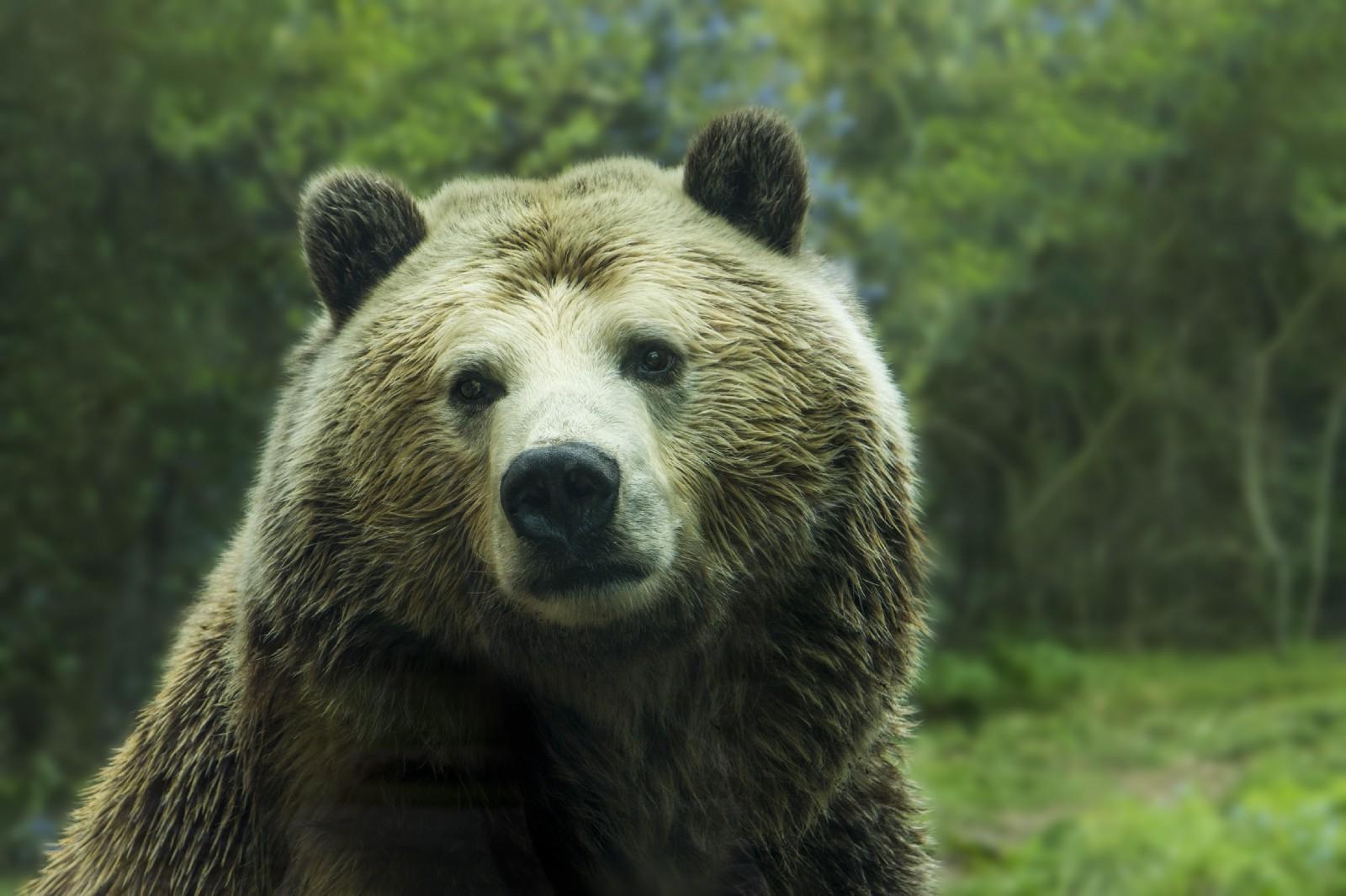 /why-the-crypto-bear-market-will-continue-59b0da25f10a feature image