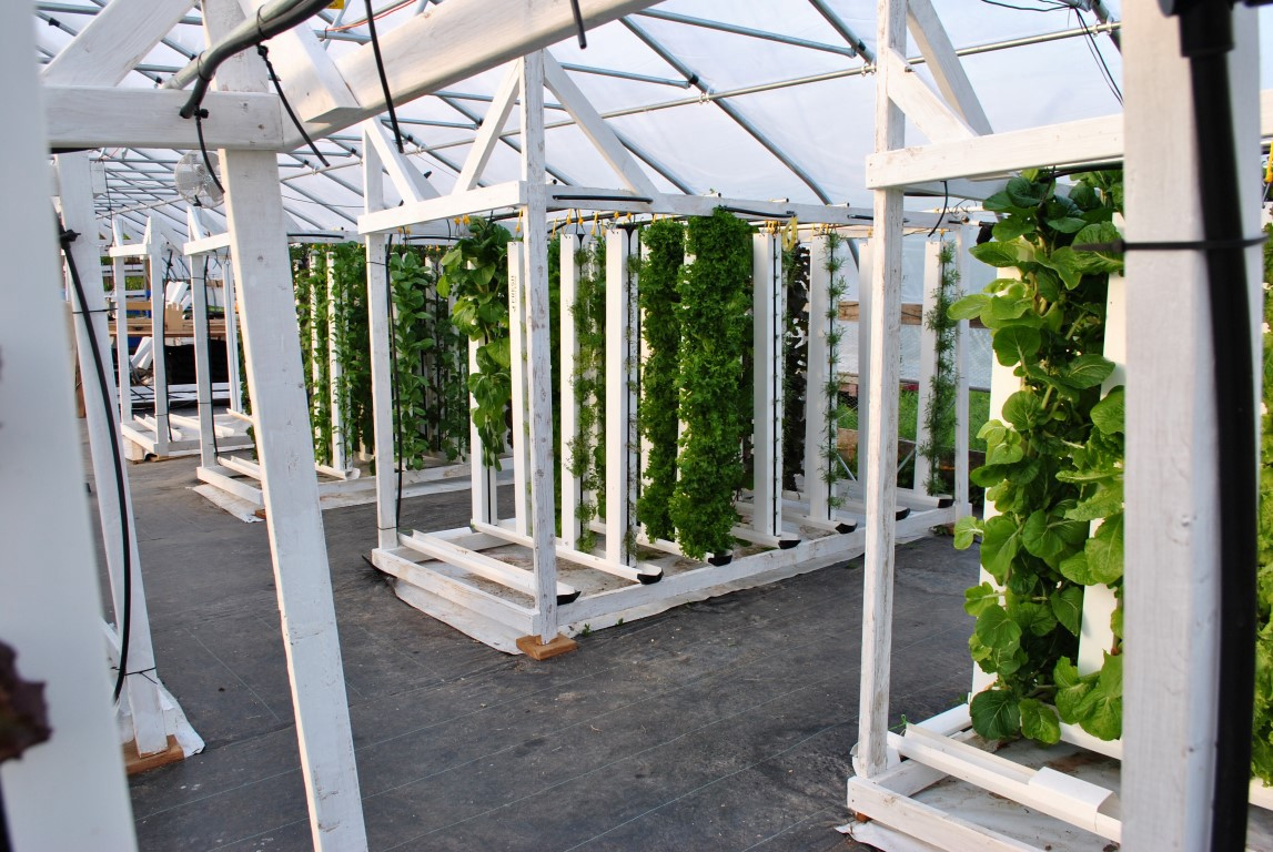 IoT AUTOMATED FARMS - THE FUTURE OF SUSTAINABLE AGRICULTURE - By