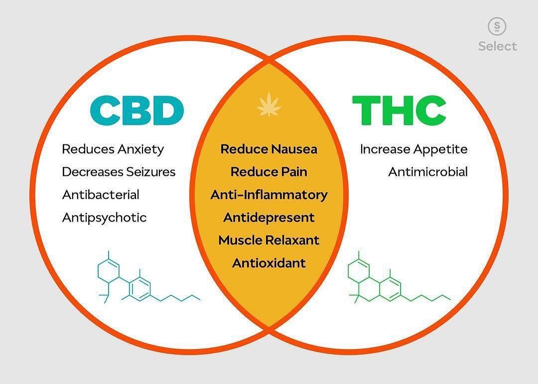 How CBD Market is moving in the right direction according to