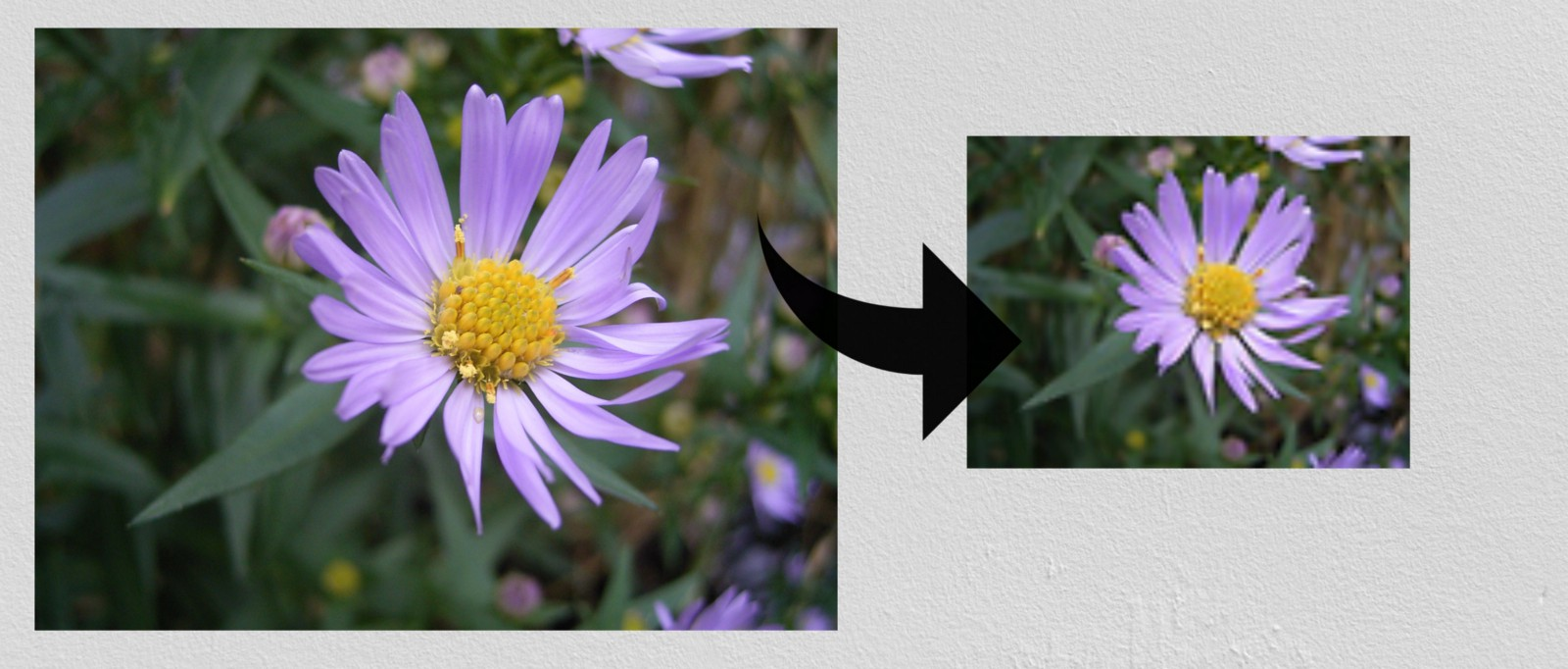 Image Thumbnail in Elixir using ImageMagick - By