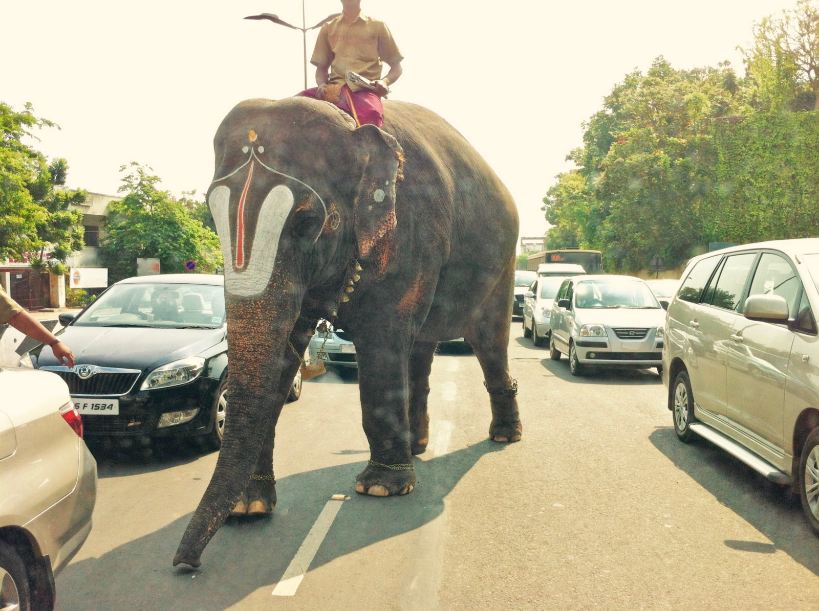 /the-invisible-elephant-in-my-photos-2ac49f41378a feature image