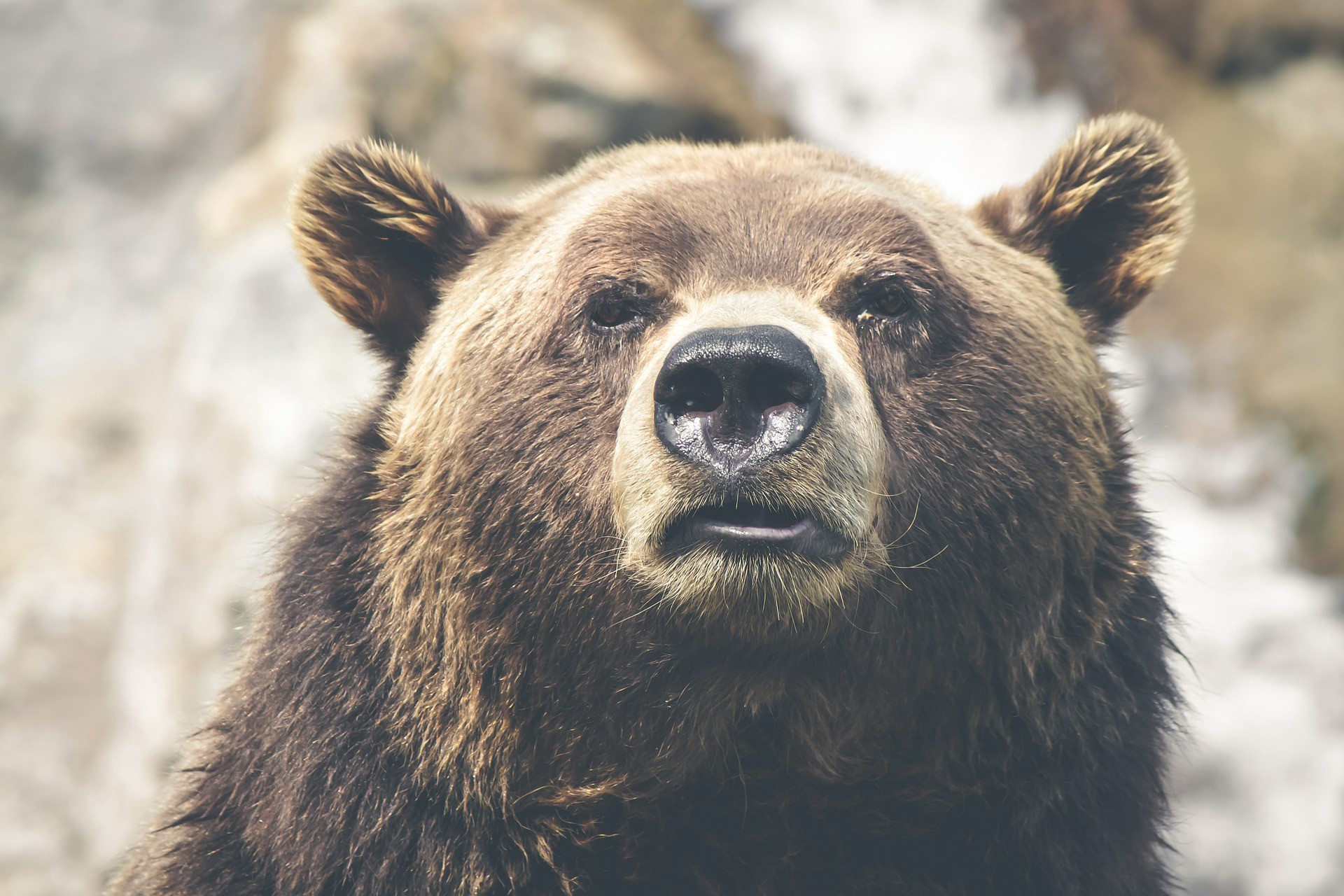 /how-to-keep-calm-in-a-bear-market-a6ef64740a06 feature image