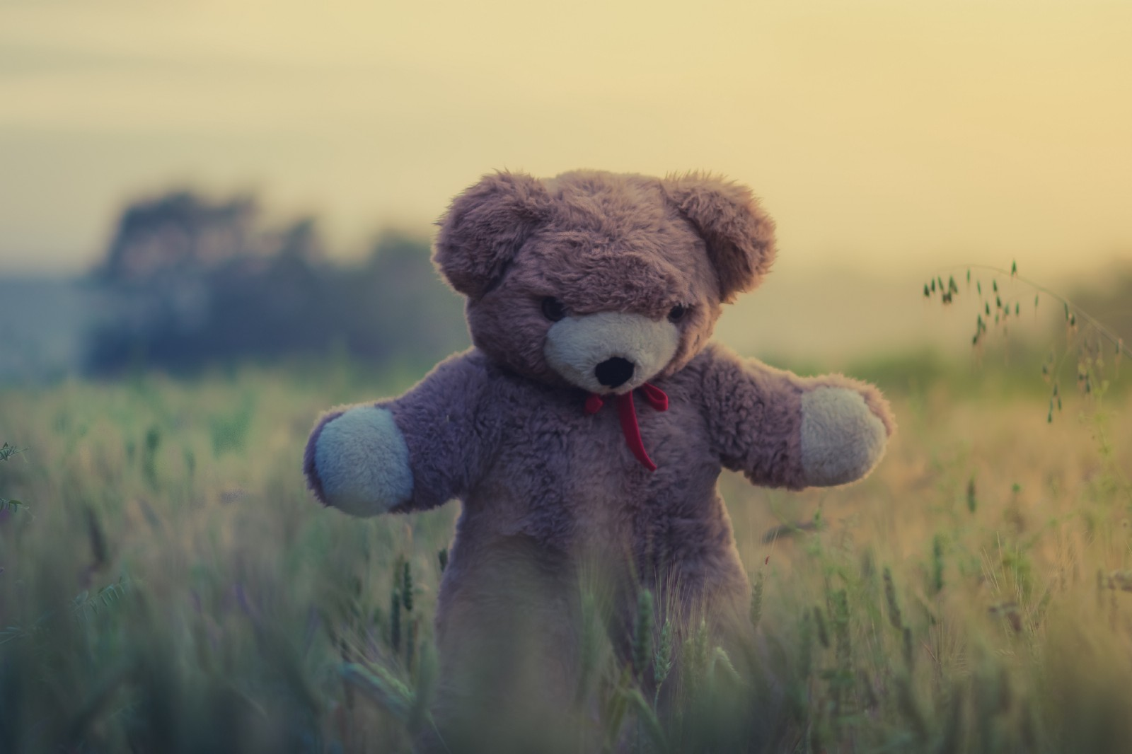 Poking The Bear: Is TunnelBear's Client Safe To Use? - By