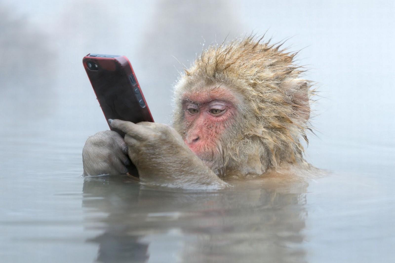 /the-gullible-ape-f3ca85a10afa feature image