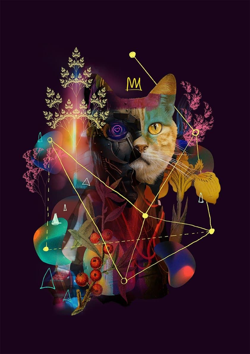 /build-your-distributed-cooperative-organization-with-disco-cat-dr3o332p feature image