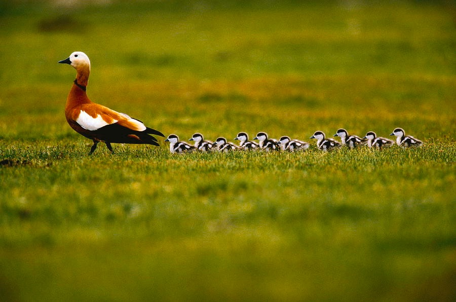 /like-a-duck-with-ducklings-understanding-defi-lending-with-unit-protocol-ot1d379j feature image