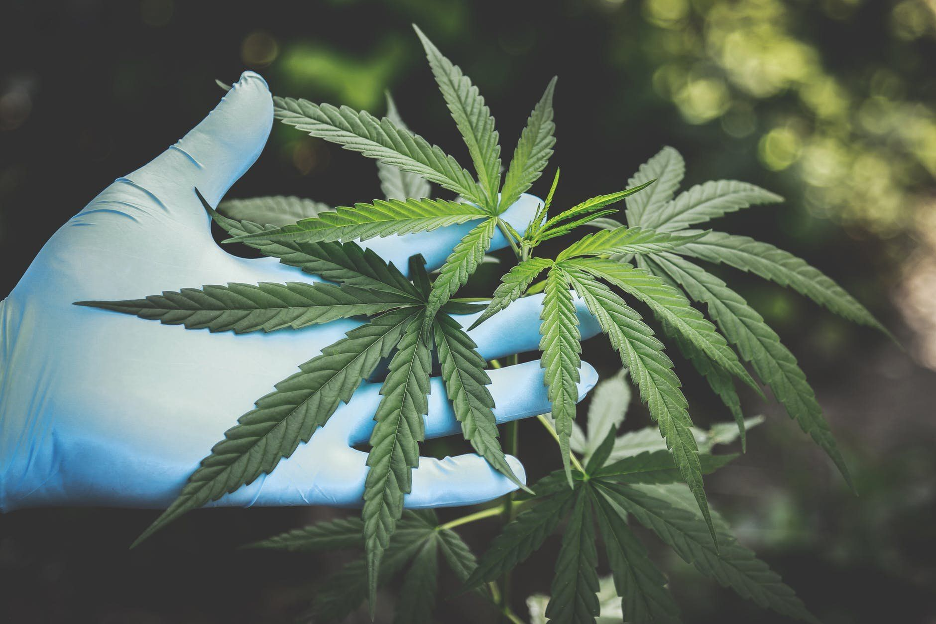 /how-technology-is-driving-the-medical-marijuana-industry-lj293336 feature image