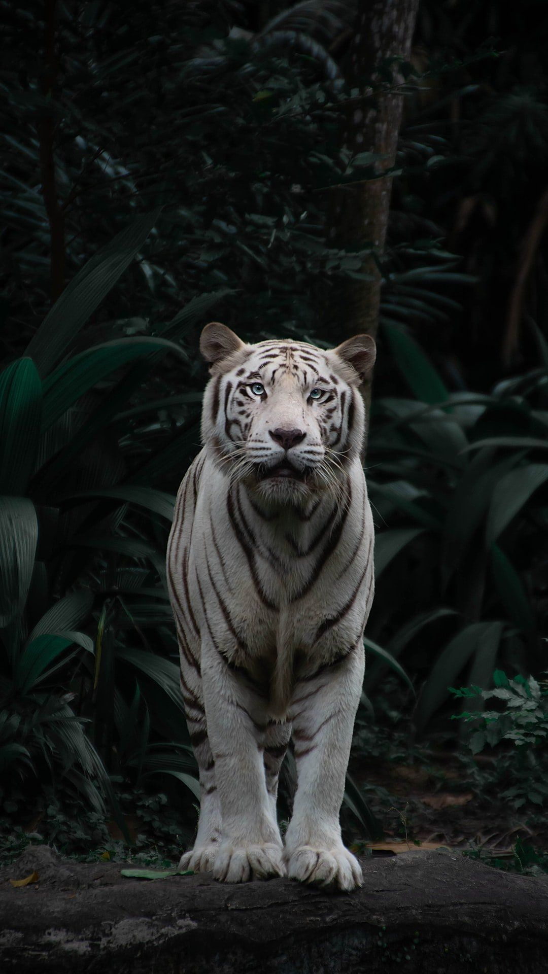 /what-are-the-good-the-bad-and-the-ugly-startup-lessons-from-netflixs-movie-the-white-tiger-xa7m3376 feature image