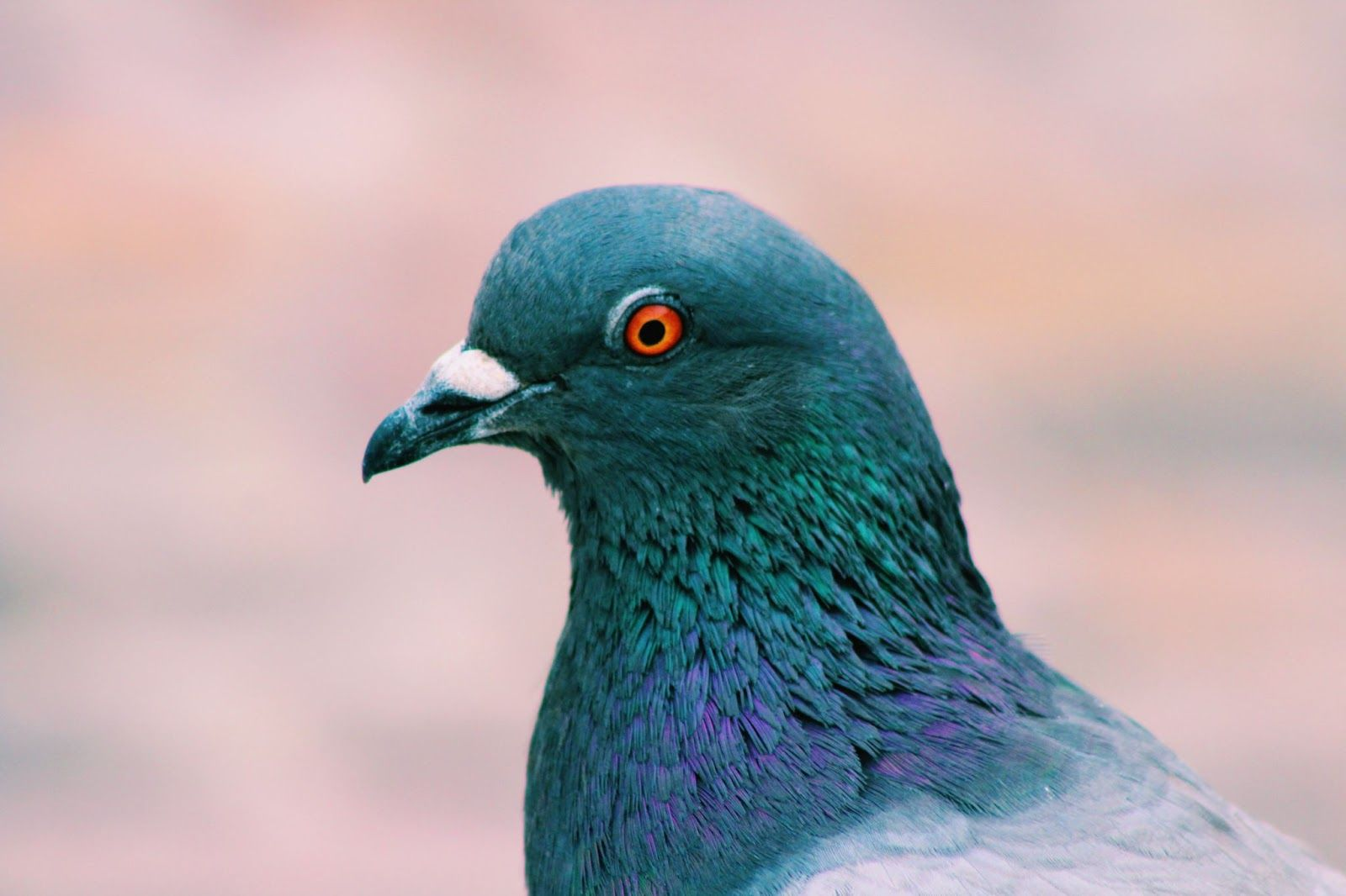 /skills-of-the-modern-day-rock-dove-look-for-these-in-your-email-marketing-tool-fi1q37t8 feature image