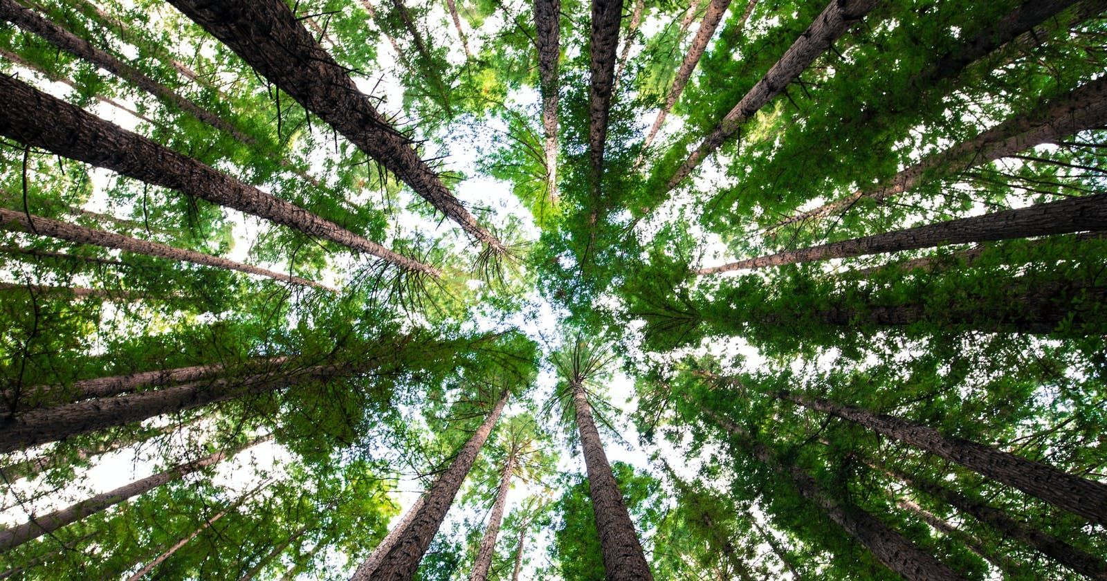 /trees-non-linear-data-structures-for-beginners-871831se feature image