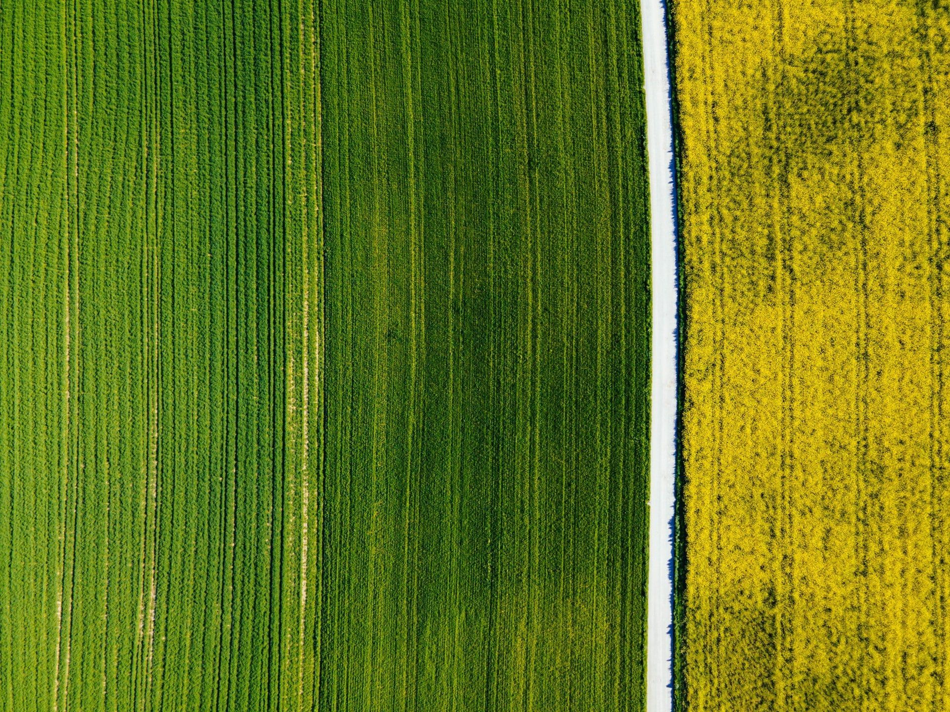 /all-you-need-is-ai-in-agriculture-5b2e376f feature image