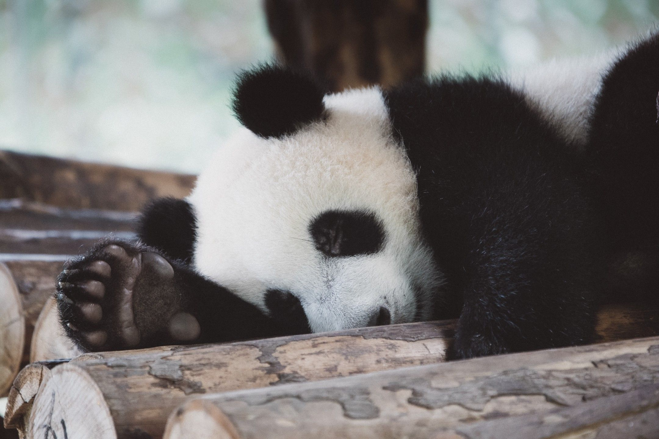 /the-python-panda-package-tutorial-1z2534r4 feature image
