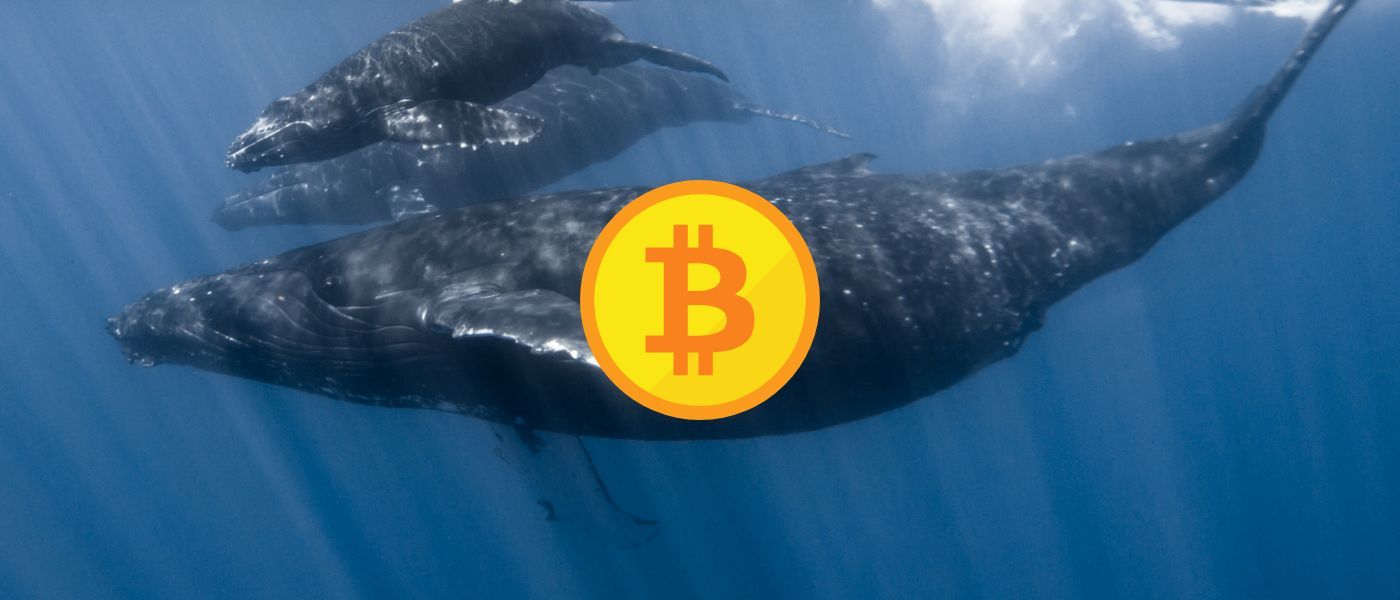 /crypto-and-the-whale-when-retail-investors-make-fish-food-ik1s34p4 feature image
